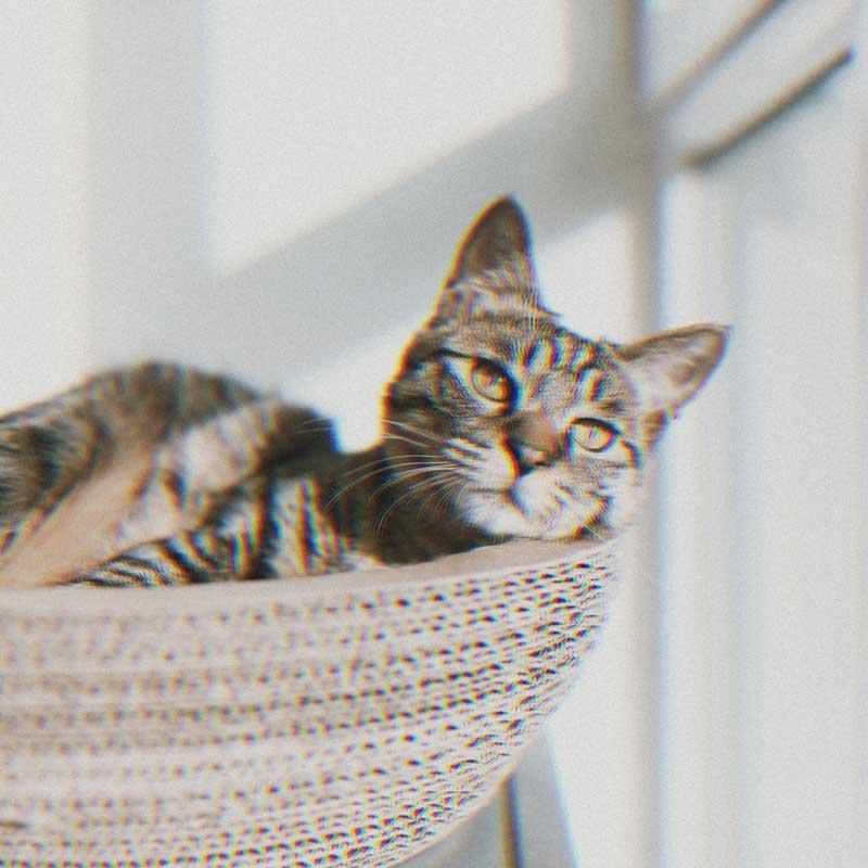 pp kucing aesthetic