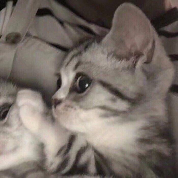 pp kucing couple
