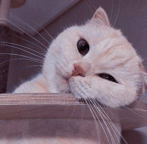 pp kucing gemoy
