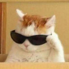 pp kucing keren