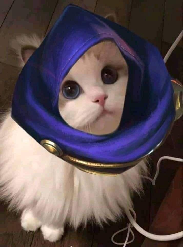 pp kucing mlbb