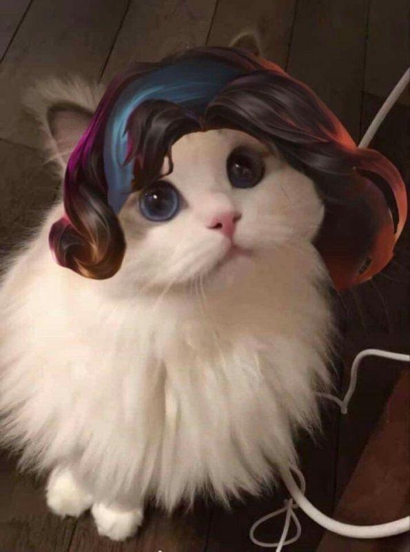 pp kucing ml